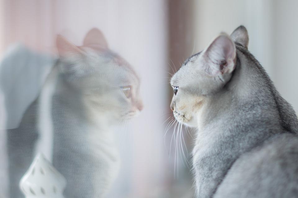 Wallpaper Kucing Imut Cat Mammal Small To Medium Sized Cats Felidae Whiskers Kitten Skin Carnivore Snout Fur 2107980 Wallpaperkiss